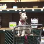 Roxy shopps